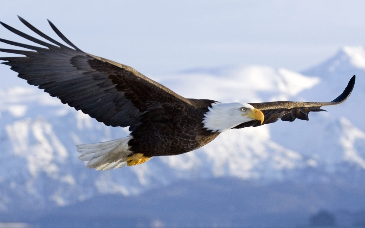 SIX LEADERSHIP PRINCIPLES TO LEARN FROM AN EAGLE