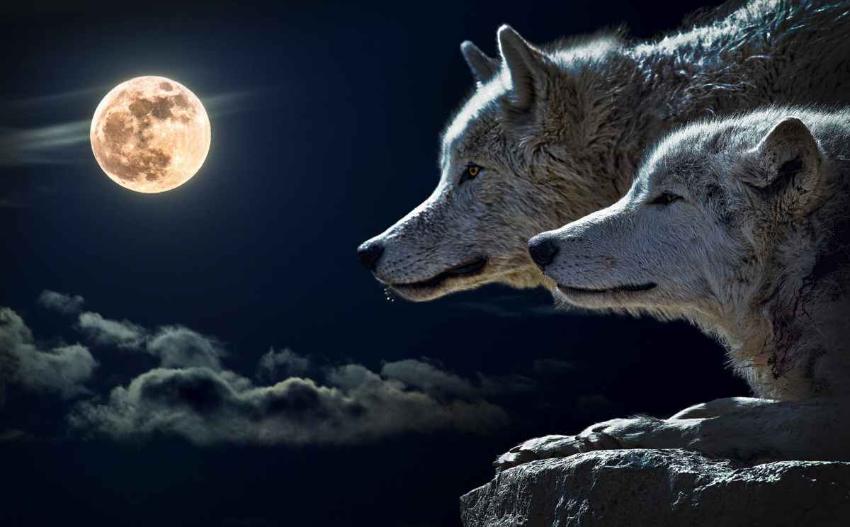 The Story Of The Two Wolves: How To Manage YourMind